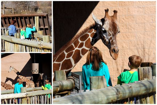 3-24-15 Zoo Day2