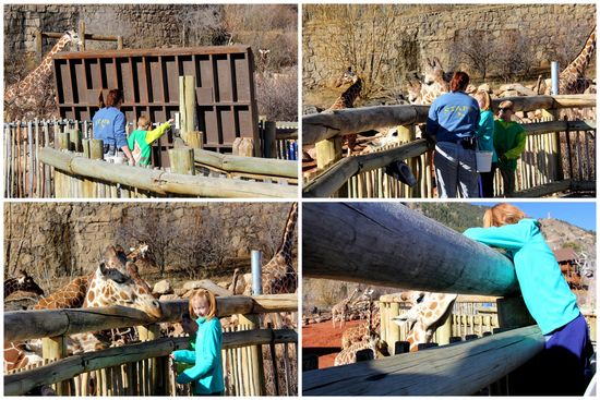 3-24-15 Zoo Day3