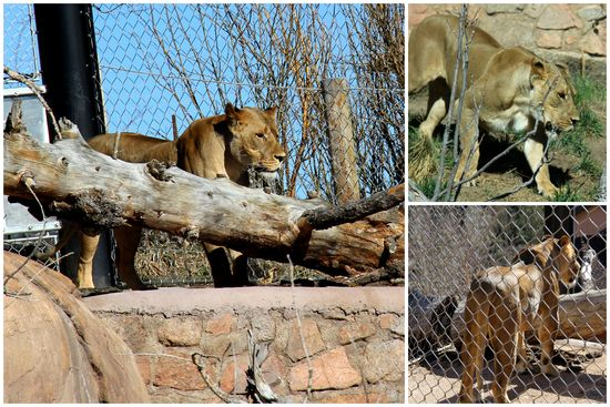 3-24-15 Zoo Day4