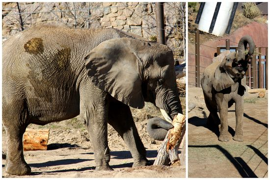 3-24-15 Zoo Day5