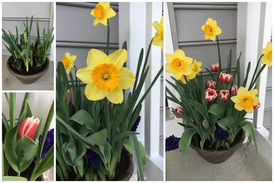 4-28-17 Flowers
