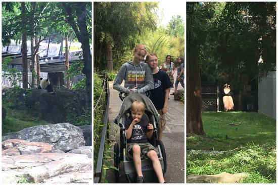 6-8-17 National Zoo5