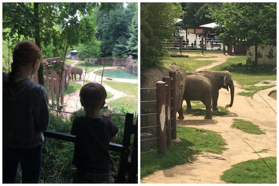 6-8-17 National Zoo4