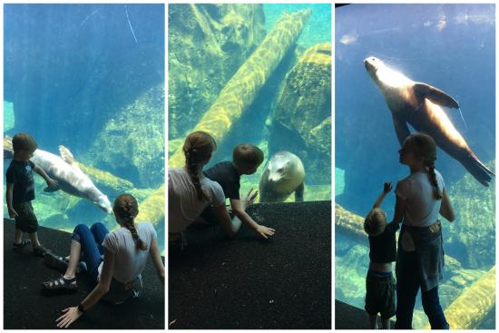 6-8-17 National Zoo1