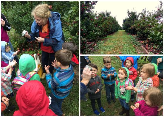 9-30-16 Preschool Apple Picking Field Trip1