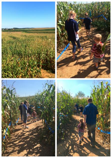 9-23-16 Corn Maze4