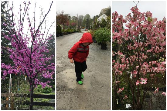 4-28-17 Flowers4