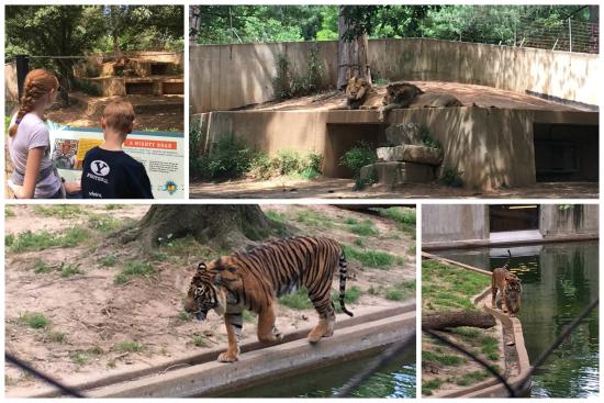 6-8-17 National Zoo3