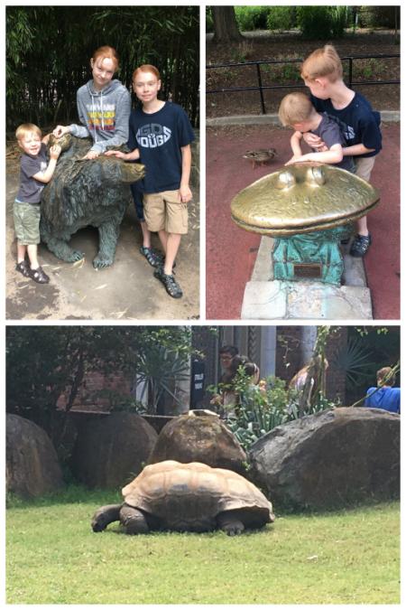 6-8-17 National Zoo7