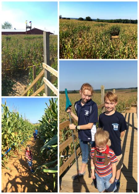 9-23-16 Corn Maze5