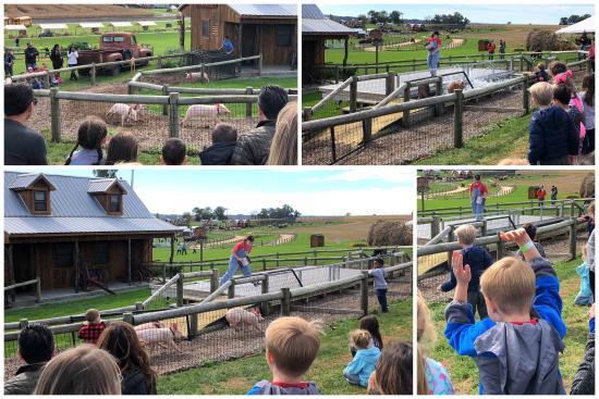 10-19-18 Arthur's Field Trip